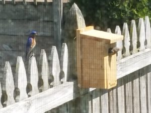 bluebird resize